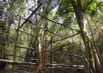 BambooCage1